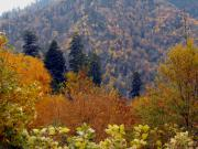 Earth Tone Posters - A Smokie Mountain Autumn Poster by Eva Thomas