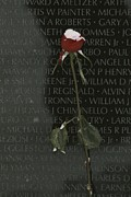 Vietnam Veterans Memorial Posters - A Snow Dusted Rose Speaks Of Lasting Poster by Karen Kasmauski