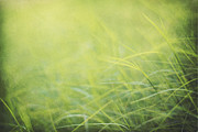 Green Field Framed Prints - A Soft Place to Fall Framed Print by Amy Tyler