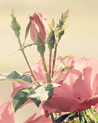 Soft Pink Metal Prints - A Soft Sweet Note Metal Print by Amy Tyler