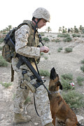 Bonding Metal Prints - A Soldier And His Search Dog Take Metal Print by Stocktrek Images