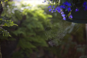 A Spider Web In A Garden Print by Taylor S. Kennedy