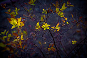Yellow Leaves Digital Art Prints - A Splash of Contrast Print by Bill Tiepelman