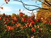 Reds Of Autumn Posters - A Splash of Red II Poster by Julie Dant