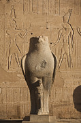 Horus Metal Prints - A Statue Of A Falcon At The Temple Metal Print by Taylor S. Kennedy