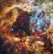 Red Dust Prints - A Stellar Nursery Known As R136 Print by Stocktrek Images