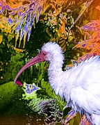 Ibis Digital Art - A Strange Ibis by Doris Wood