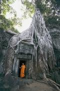 Tree Roots Photos - A Strangler Figs Gnarled Roots Creep by Paul Chesley