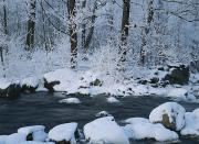 Woodland Scenes Photo Prints - A Stream Running Through Snowy Woodland Print by Mattias Klum
