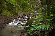 Lush Green Framed Prints - A Stream Runs Through A Tropical Jungle Framed Print by Taylor S. Kennedy