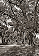 Evergreen Plantation Prints - A Stroll Through Time monochrome Print by Steve Harrington