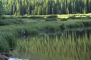 Willow Lake Metal Prints - A Study In Green Metal Print by David Bearden