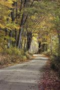 Dirt Roads Photos - A Sun-dappled Road Winds by Medford Taylor
