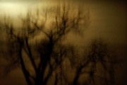 Spooky Trees Framed Prints - A Surreal Evening Framed Print by Marilyn Hunt