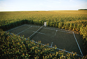 Sports Fields Framed Prints - A Tennis Court Carved From A Corn Field Framed Print by Joel Sartore
