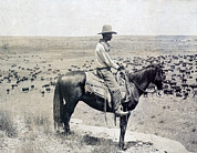 1900s Prints - A Texas Cowboy On Horseback On A Knoll Print by Everett