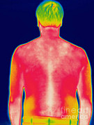 Backs Prints - A Thermogram Of A Man Print by Ted Kinsman