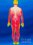 Nude Men Posters - A Thermogram Of A Nude Man Back Poster by Ted Kinsman