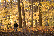Fall Photographs Prints - A Three Year Old Boy Walks Print by Skip Brown