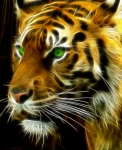 Tiger Fractal Photos - A Tigers Stare by Ricky Barnard