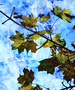 Leaf Abstract Framed Prints - A Time For Change Framed Print by Bill Cannon