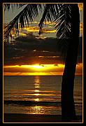 Coconut Palm Tree Posters - A Touch of Paradise Poster by Holly Kempe