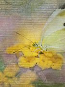Blooms  Butterflies Prints - A Touch of Yellow Print by Betty LaRue
