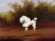 Kitsch Painting Posters - A Toy Poodle in a Landscape  Poster by Frederick French