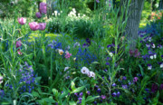 Giverny Prints - A Tranquil Garden Print by Kathy Yates