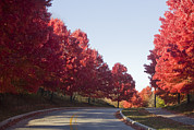 Clear Fall Day Posters - A Tree Lined Street On An Autumn Day Poster by Taylor S. Kennedy