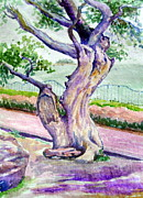 Prabhu  Dhok - A tree near upper lake.