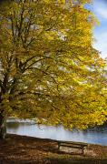 A Tree With Golden Leaves And A Park Print by John Short