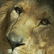 Lion Art - A Tribute to Elson 4 by Ernie Echols