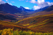 Distant Mountains Posters - A Valley Blooms With Autumn Colors Poster by Nick Norman