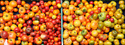Baskets Posters - A Variety of Fresh Tomatoes - 5D17904-long Poster by Wingsdomain Art and Photography