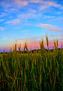 Purple Sky Posters - A View from Crop Level Poster by Bill Tiepelman
