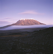 Fog Metal Prints - A View Of Snow-capped Mount Kilimanjaro Metal Print by David Pluth