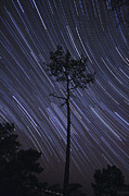 Bare Trees Prints - A View Of Star Trails Taken Print by Miguel Claro