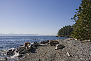Sooke Prints - A View Of The Shoreline Of Vancouver Print by Taylor S. Kennedy