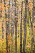 Color Change Framed Prints - A View Of Trees In A Forest On An Framed Print by Taylor S. Kennedy