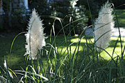 Kelly Digital Art Prints - A view over the pampas grass Print by Kelly Rader