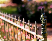 Fence Photos - A Walk in the Garden by Rebecca Cozart