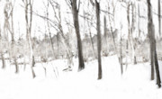 Snow Scenes Metal Prints - A Walk In The Woods Metal Print by Kathy Jennings