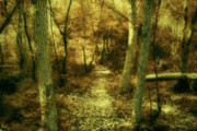 Pathway Digital Art - A Walk In The Woods by Sari Sauls