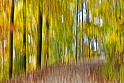 Susan Leggett Digital Art Metal Prints - A Walk in the Woods Metal Print by Susan Leggett