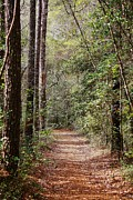 Fantasy Photos - A Walk in the Woods by Paulette  Thomas