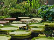 Byron Varvarigos - A Water Garden