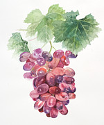 Grape Leaf Prints - A Watercolor Painting Of A Bunch Of Grapes Print by Ayako Tsuge