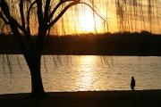 Sunrises And Sunsets Prints - A Weeping Willow Curtains A Walker Print by Stephen St. John