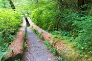 Sitka Photos - A Well Marked Path by Heidi Smith